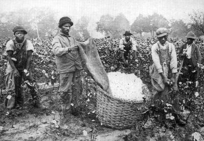 Cotton pickers in America's deep south.